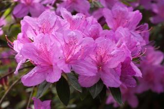 IDD fleurs 2014 - 2
